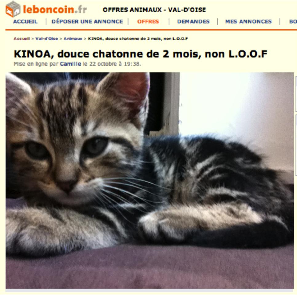 kinoa_chaton